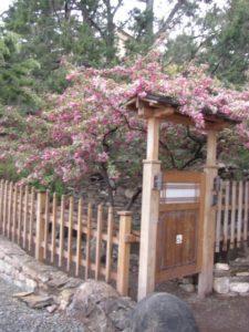 Flower blooming at 10,000 Waves Spa Resort